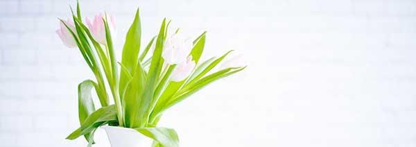 Start Fresh: Fun Ways to Welcome Spring!!!